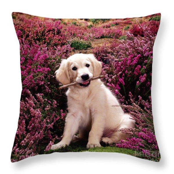 Golden Retriever Puppy Throw Pillow by Jane Burton