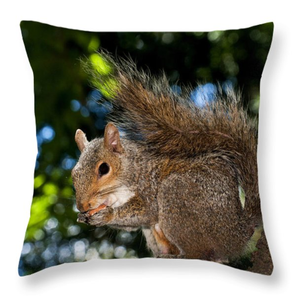 Gray squirrel Throw Pillow by Fabrizio Troiani