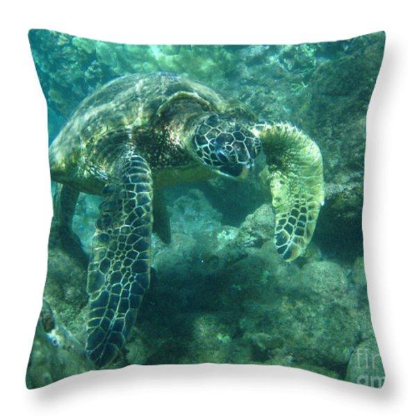 Green Sea Turtle Hawaii Throw Pillow by Bob Christopher