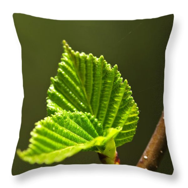 Green spring leaves Throw Pillow by Elena Elisseeva
