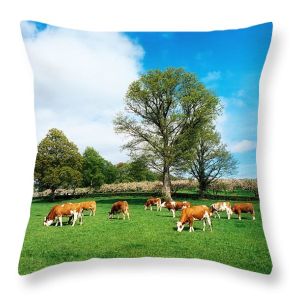 Hereford Bullocks Throw Pillow by The Irish Image Collection
