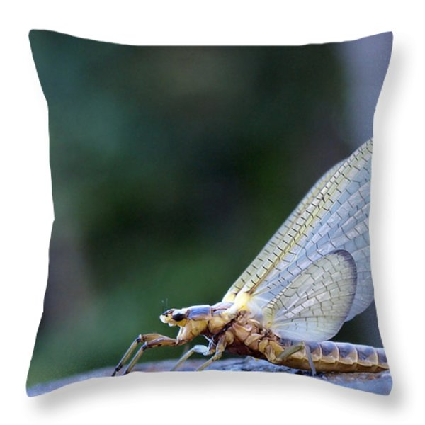 Hex 6 Throw Pillow by Thomas Young