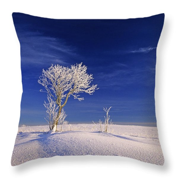 Hoar Frost On Trees, Bungay, Prince Throw Pillow by John Sylvester