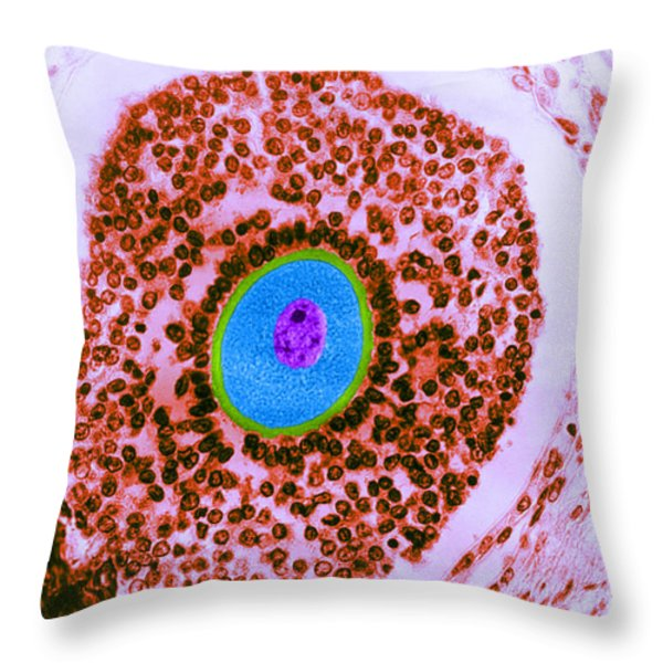 Human Ovum Lm Throw Pillow by Omikron