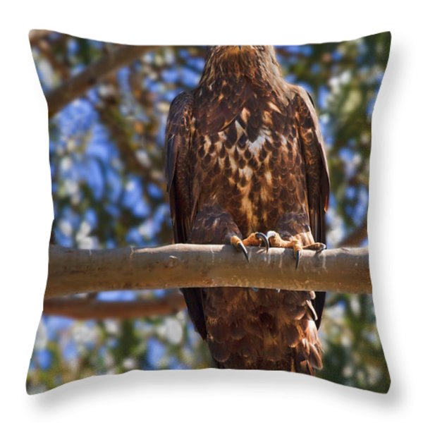 Immature Bald Eagle Throw Pillow by Beth Sargent