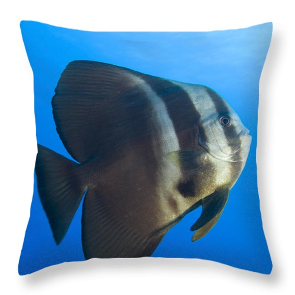 Longfin Spadefish, Papua New Guinea Throw Pillow by Steve Jones