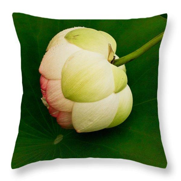 Lotus Throw Pillow by Jean Noren