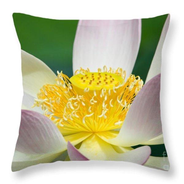 Lotus Up Close Throw Pillow by Sabrina L Ryan