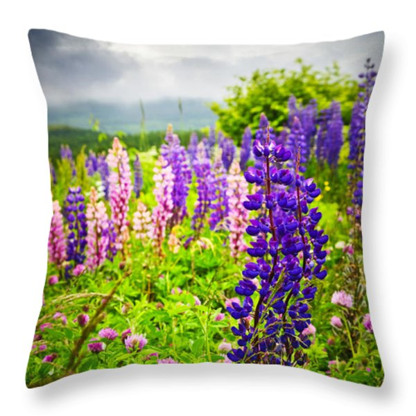 Lupins in Newfoundland meadow Throw Pillow by Elena Elisseeva