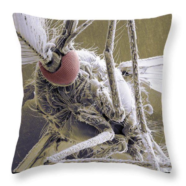 Male Mosquito Throw Pillow by Ted Kinsman