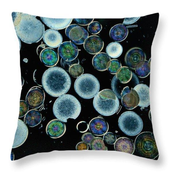Microscopic View Of Diatoms Throw Pillow by Darlyne A. Murawski