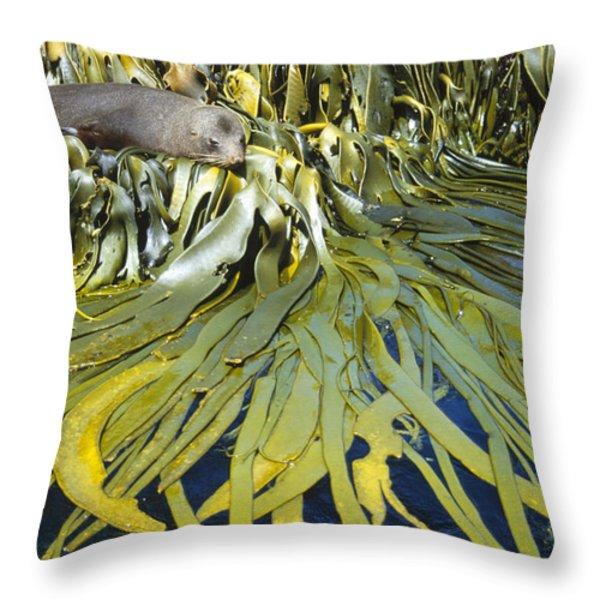 New Zealand Fur Seal Arctocephalus Throw Pillow by Tui De Roy