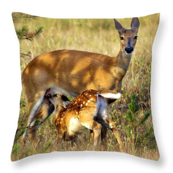 Nursing Fawn Throw Pillow by Marty Koch