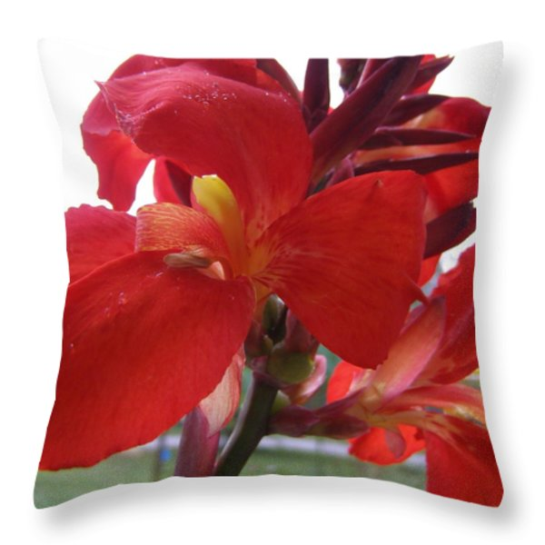Red Canna Lily Throw Pillow by Sandi Floyd