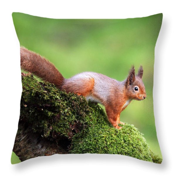 Red Squirrel Throw Pillow by Grant Glendinning