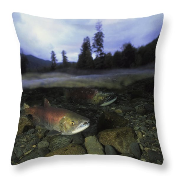 Salmon, Clayoquot Sound, Vancouver Throw Pillow by Joel Sartore
