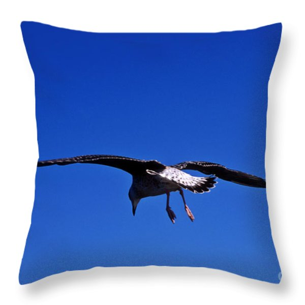 Seagull in flight Throw Pillow by John Greim