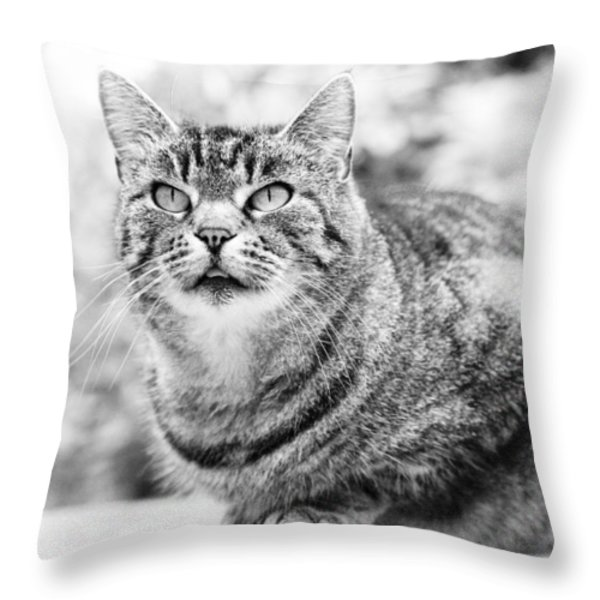 Tomcat Throw Pillow by Frank Tschakert