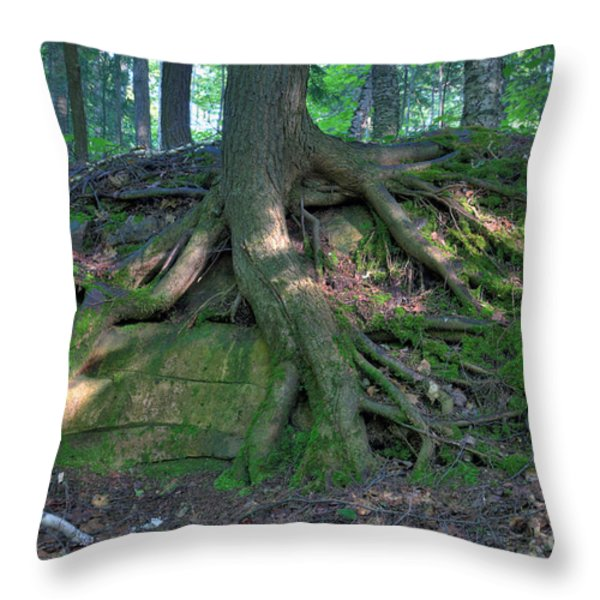 Tree Growing Over A Rock Throw Pillow by Ted Kinsman