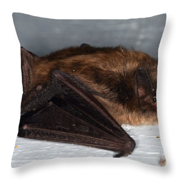 Little Brown Bat Throw Pillow by Ted Kinsman