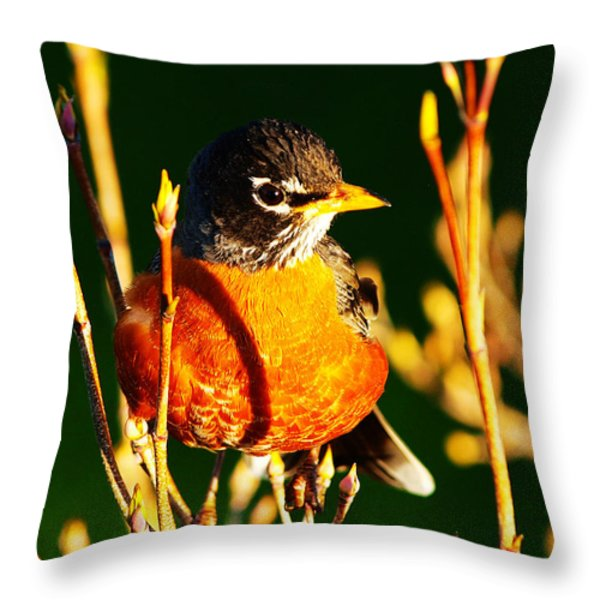 American Robin Throw Pillow by Paul Ge