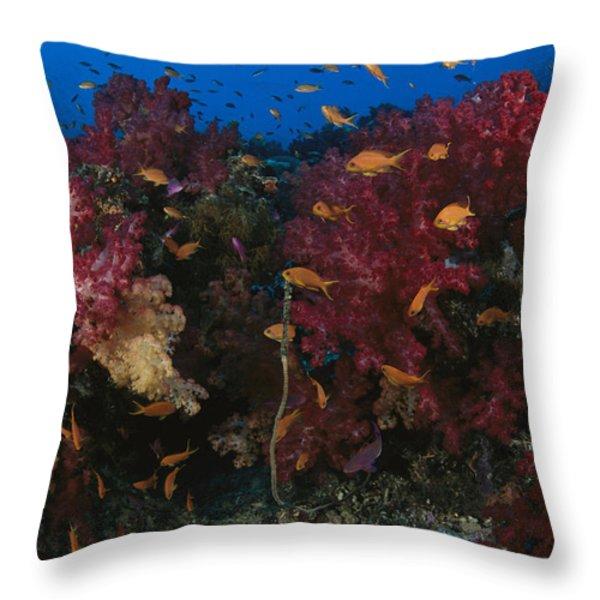 Anthias Fish Swim Near A Reef Wall Throw Pillow by Tim Laman
