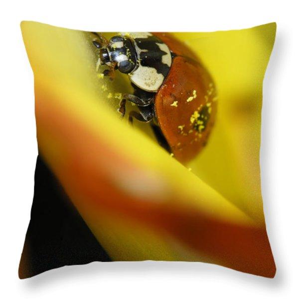 Beetle Throw Pillow by Igor Sinitsyn