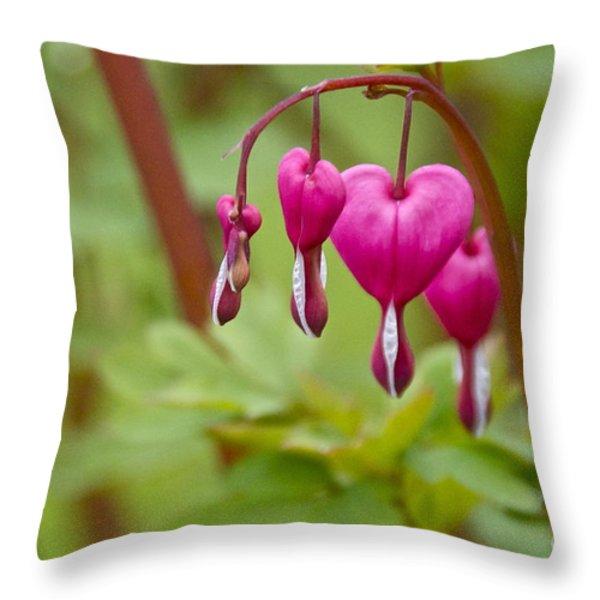 Bleeding Hearts Throw Pillow by Sean Griffin