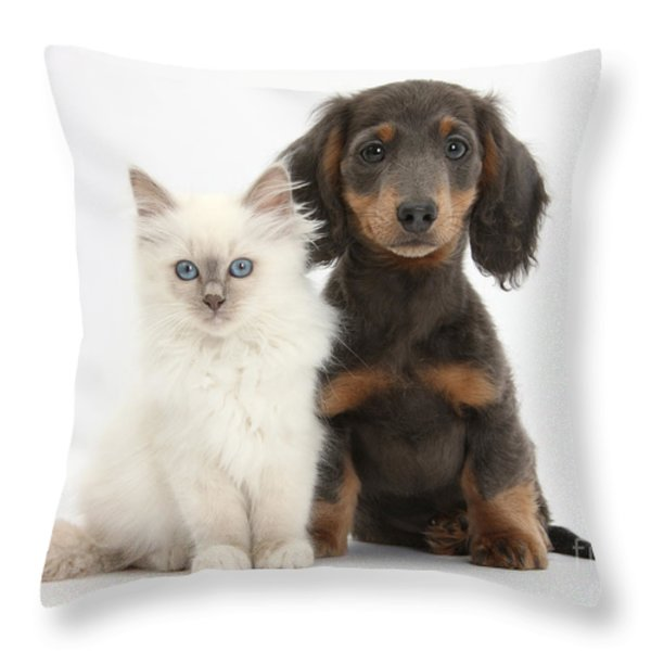 Blue-point Kitten & Dachshund Throw Pillow by Mark Taylor