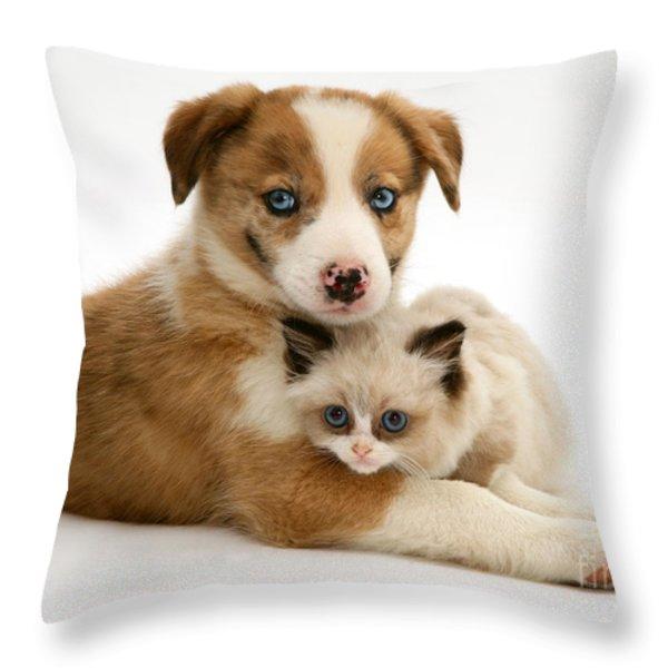 Border Collie And Birman-cross Kitten Throw Pillow by Jane Burton