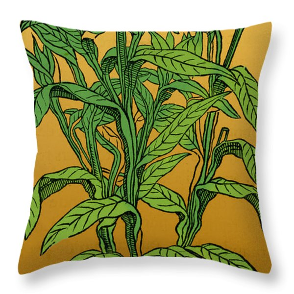 Centaurea Montana, Bachelors Button Throw Pillow by Science Source