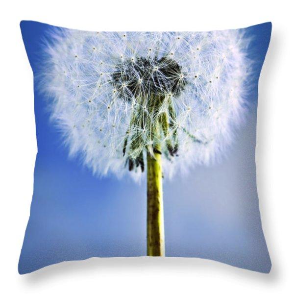 Dandelion Throw Pillow by Elena Elisseeva