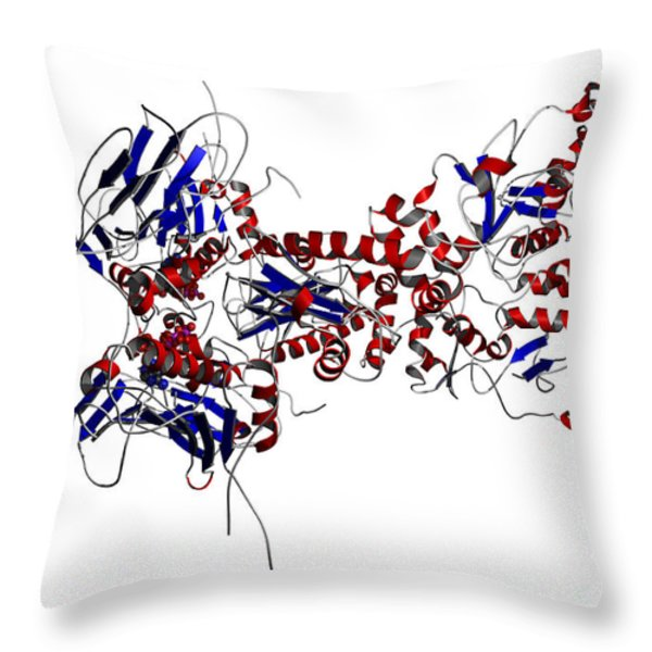 Heat Shock Protein 90 In A Larger Throw Pillow by Ted Kinsman