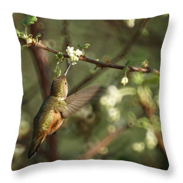 Hummingbird Throw Pillow by Ernie Echols