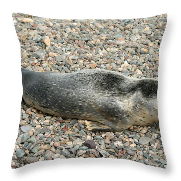 Injured Harbor Seal Throw Pillow by Ted Kinsman