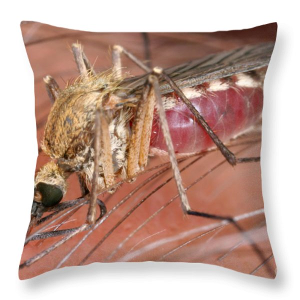 Mosquito Biting A Human Throw Pillow by Ted Kinsman