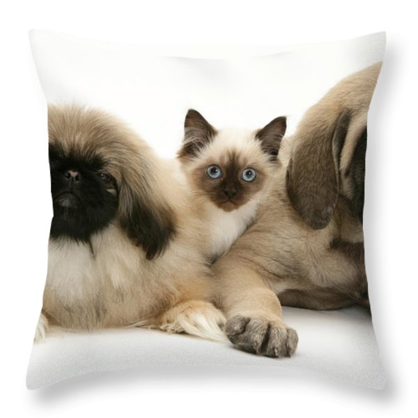 Puppies And Kitten Throw Pillow by Jane Burton