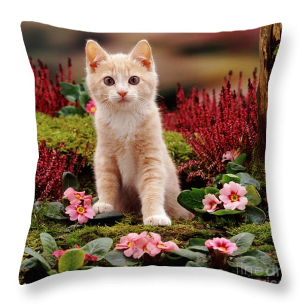 Kitten Throw Pillow by Jane Burton
