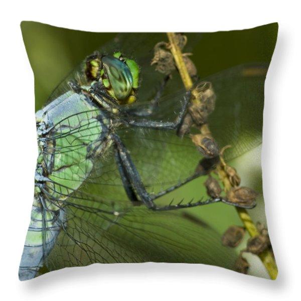 Macro Throw Pillow by Jack Zulli