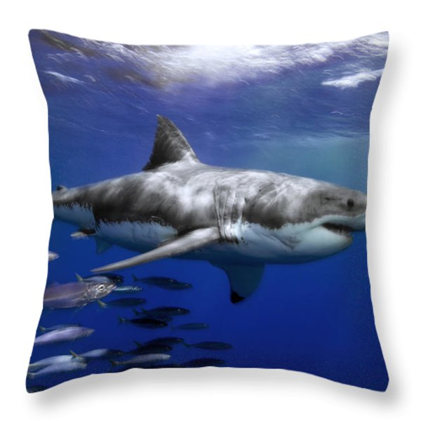 A Great White Shark Swims In Clear Throw Pillow by Mauricio Handler