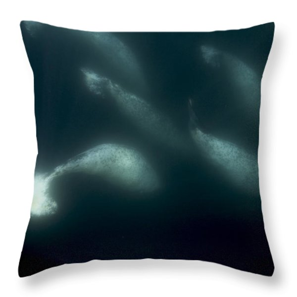 A Pod Of Male Narwhals Gather Throw Pillow by Paul Nicklen