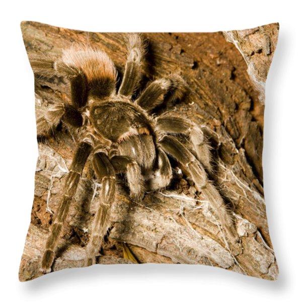 A Tarantula Living In Mangrove Forest Throw Pillow by Tim Laman