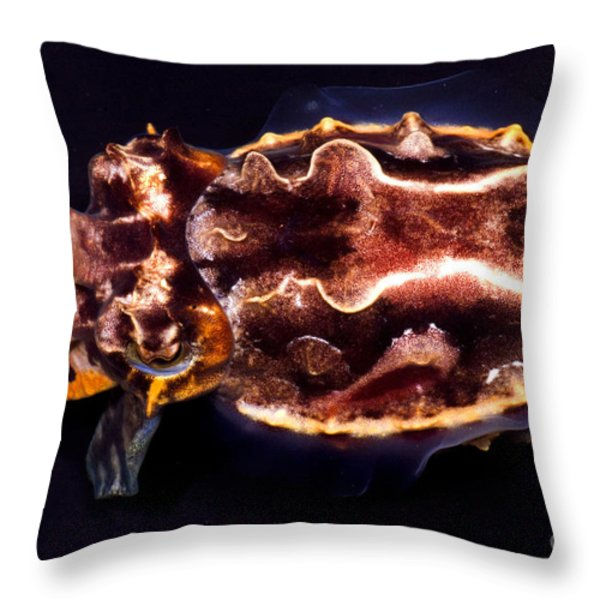 Flamboyant Cuttlefish Throw Pillow by Dante Fenolio