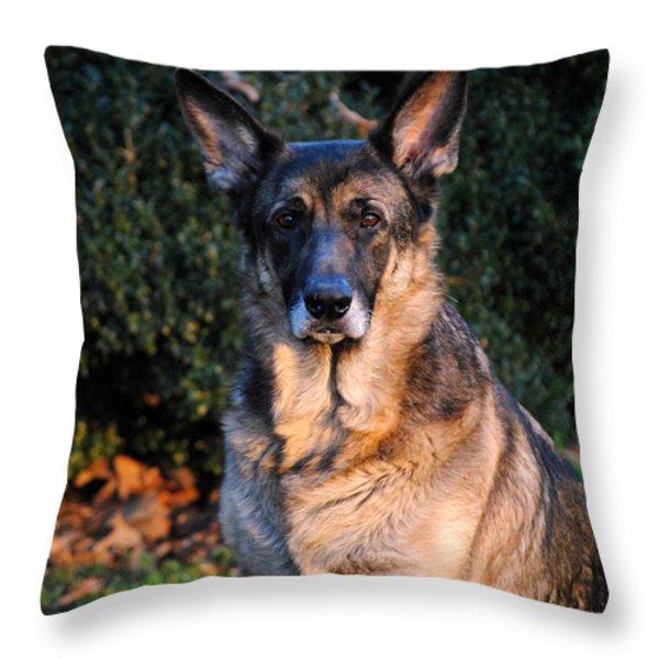 German Shepherd Throw Pillow by Jai Johnson