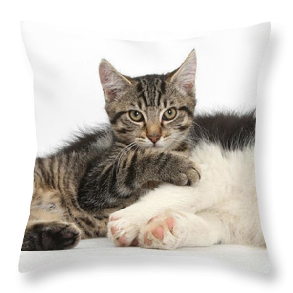 Tabby Kitten & Border Collie Throw Pillow by Mark Taylor