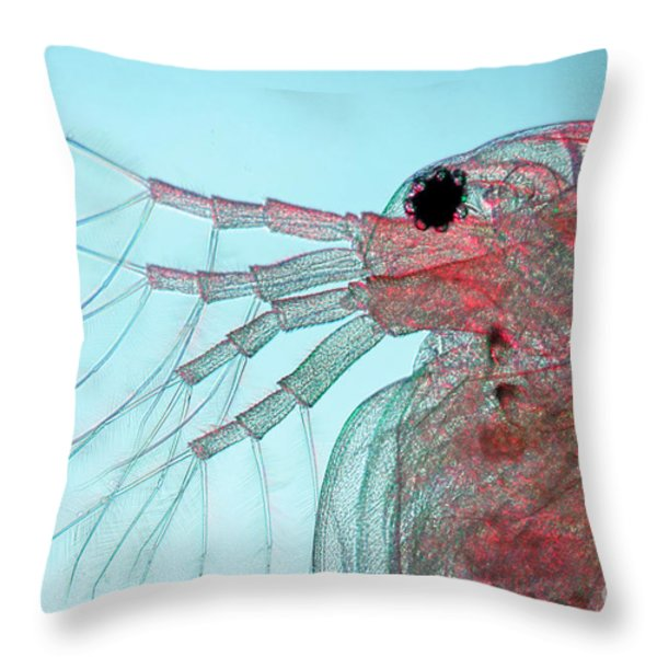 Water Flea Daphnia Magna Throw Pillow by Ted Kinsman