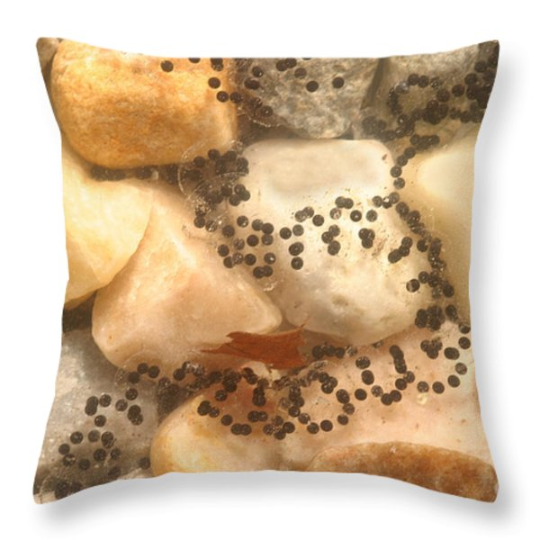 American Toad Eggs Throw Pillow by Ted Kinsman