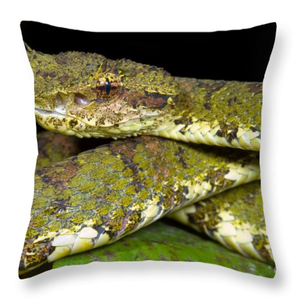 Eyelash Viper Throw Pillow by Dante Fenolio