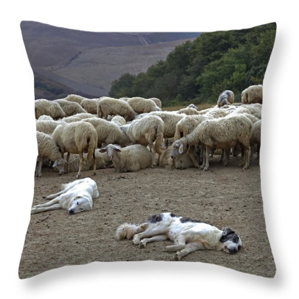 Flock Of Sheep Throw Pillow by Joana Kruse