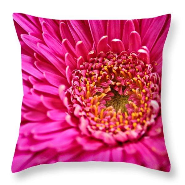 Gerbera flower Throw Pillow by Elena Elisseeva